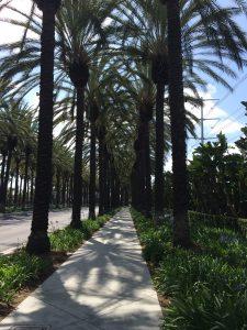 summit palm trees
